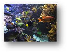 réservoirs de biodiversité image023
